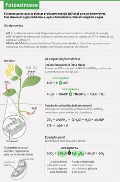 Fotossíntese e vida na Terra: Produção de oxigênio e glicose - Pesquisa Escolar - UOL Educação