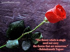 Something about a single red rose that is oh so romantic. I admit my absolute favorite flower is the classic red rose. Beautiful Red Roses Images, Beautiful Soul, Amazing Flowers, Red Rose Pictures, Ronsard Rose, Single Red Rose, Rose Images, Janis Joplin, The Way You Are