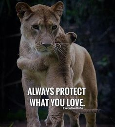 Best Positive Quotes : QUOTATION - Image : As the quote says - Description Always protect what you love. Best Positive Quotes, Best Motivational Quotes, Inspirational Quotes, Positive Life, Lion Quotes, Me Quotes, Qoutes, Momma Quotes, Fight Quotes