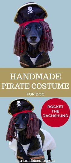 ea3b5d1ce284 8 Best Dog Pirate Costume | PurePirate.com images | Dog pirate ...