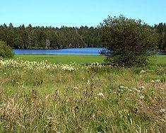 Der Etang de la Gruère - Wanderland Wanderland, Golf Courses, Road Trip Destinations, Environment, Plants