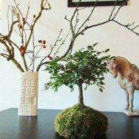 Zboží prodejce P0TMĚCHUŤ / Zboží   Fler.cz String Garden, Plants, Home Decor, Decoration Home, Room Decor, Plant, Home Interior Design, Planets, Home Decoration