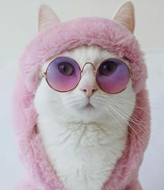All things pets Animals And Pets, Funny Animals, Cute Animals, Nature Animals, Cute Kittens, Cats And Kittens, Cat Sunglasses, Cat Aesthetic, Cat Sitting