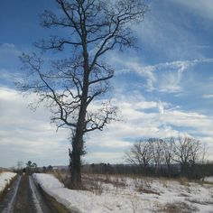 Post #snowzilla by ramsgrams
