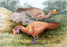 Sylviornis — вымерший род птиц из отряда курообразных, содержащий единственный вид — Sylviornis neocaledonica, иногда ошибочно называемый новокаледонский гигантский большеног.