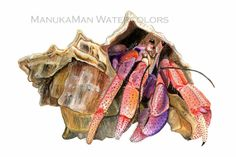Hermit Crab Print of Watercolor painting by Damon Crook x Watercolor Animals, Watercolor Paintings, Original Paintings, Watercolors, Crab Art, Ap Studio Art, Nautical Art, Sketch Painting, Animal Sketches