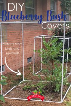 Protect blueberry bushes, tomato plants, or anything else you have growing from birds and squirrels with this easy to assemble covers. Using PVC and wildlife netting, create re-useable covers that will protect your harvest. Fruit Bushes, Fruit Trees, Planting Blueberry Bushes, Bush Garden, Garden Trees, Container Plants, Container Gardening, Funny Bird, Growing Blueberries
