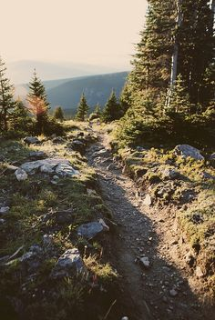Hiking trail - sunlight - pine trees - mountains
