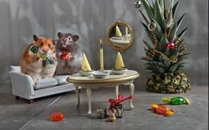 Cuteness Overload When Hamsters Take Over House Management