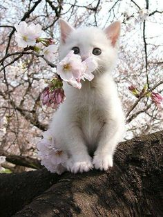 Kitten & Apple Blossoms