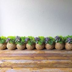 How do I care for my succulent kokedama? – Tips & Advice Indoor Water Garden, Indoor Flower Pots, Lawn And Garden, Indoor Plants, Succulent Bowls, Succulent Gardening, Container Gardening, Succulents In Containers, Cacti And Succulents