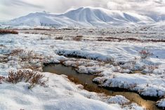The tundra region is the coldest biome existing on Earth. Although it is one of the most inhospitable habitats in the world, there are surprisingly quite a few interesting plants and animals that exist here. Arctic Tundra, Natural Wonders, Mother Earth, Mother Nature, Wilderness, Habitats, Trip Advisor, Scenery, Paisajes