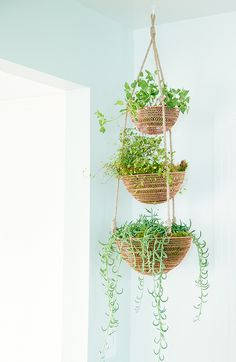 This post contains the most inexpensive decorative DIY hanging planters. These planters will definitely make your indoor garden astonishing. Plant Basket, Basket Planters, Indoor Planters, Diy Planters, Planter Ideas, Plants Indoor, Outdoor Plants, Potted Plants, Diy Hanging Planter