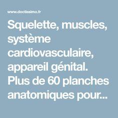 Squelette, muscles, système cardiovasculaire, appareil génital. Plus de 60 planches anatomiques pour comprendre les secrets du corps humain.