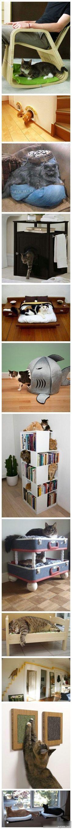 kitty kitty!