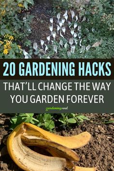These 20 clever and easy Gardening Hacks are so useful that using them can change the way you garden forever. #gardeninghacks #gardenhacks Rose Cuttings, Easy Garden, No Way, Garden Landscaping, Gardening Hacks, Helpful Hints, Garden Design, Change, Landscape