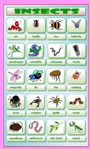 Insects - ESL worksheet by Krümel List Of Insects, Insects Names, English Fun, Vocabulary Worksheets, Science Experiments Kids, Spring Crafts, Esl, How To Draw Hands, African Dress