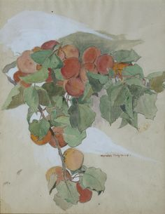 Apricots 2 Lucia Mathews | OMCA COLLECTIONS