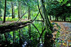Wald in Wassenberg