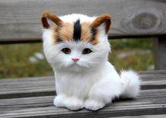 Adorable white kitten waiting for mommy