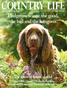 Hampshire country houses for sale near excellent schools - Country Life Roberts Radio, Sussex Spaniel, Country Life Magazine, English Magazine, Uk Today, Stunning Photography, Hampshire, About Uk, Countryside