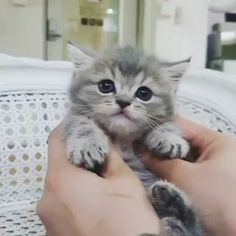 These cute kittens will make you amazed. Cats are fascinating creatures. Cute Cat Gif, Cute Funny Animals, Cute Baby Animals, Funny Cats, Cute Kitty, Cute Cat Memes, Cute Cats And Kittens, Baby Cats, Kittens Cutest