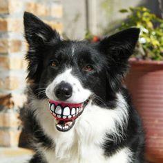 Dog with Grinz Treat Ball