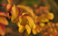 fall : Full HD Pictures 1920x1200