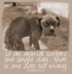 please speak for them....our voices are their only chance! please help them when they are in need...they have no means to help themselves.