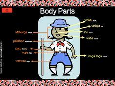 Te Reo Maori Learn some basic Maori words here! create using Thinglink. Time Activities, Infant Activities, Educational Activities, Learning Activities, Teaching Resources, Teaching Ideas, Maori Words, Classroom Displays, Classroom Ideas