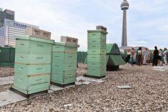 Beehive boxes atop the Royal York Hotel, Toronto, Canada.