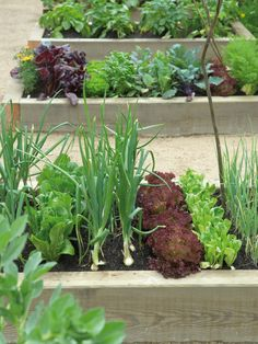 Get inspired by these raised-bed gardens // Great Gardens & Ideas //