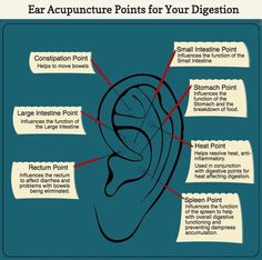 42 best acupuncture images on pinterest acupuncture acupressure check out these acupuncture ear points for your digestion fandeluxe Images