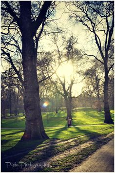 Sun breaking through a winter's day in Green Park, London