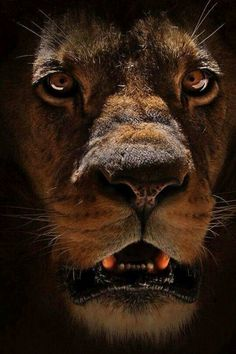 Angry young king ....