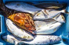 Variedad de pescado de la Bahia