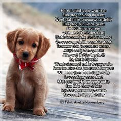 Honden Dog Quotes, Animal Quotes, Animals And Pets, Cute Animals, Beautiful Lyrics, Dutch Quotes, Black Labrador, King Charles Spaniel, Rottweiler