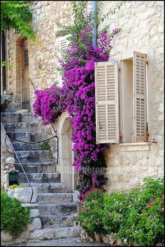 Maison en pierre - St-Paul-de-Vence, Provence  (Love the flowering vine clinging to the stone wall.)