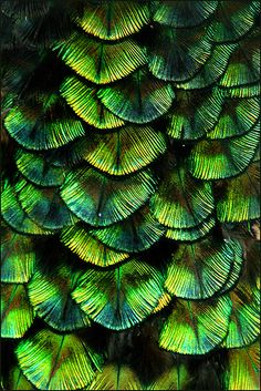 Feathers? Scales? From those that fly to those that swim and all in between, we're all colorful and beautiful in our ways!