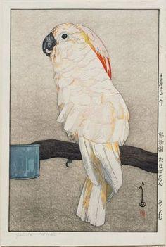 Ôbatan Parrot (Ôbatan ômu), from the series Zoo (Dôbutsuen) 「動物園 於ほぼたん おうむ」 Japanese, Taishô era–Shôwa era, 1926 (Taishô 15/Shôwa 1) Yoshida Hiroshi, Japanese, 1876–1950