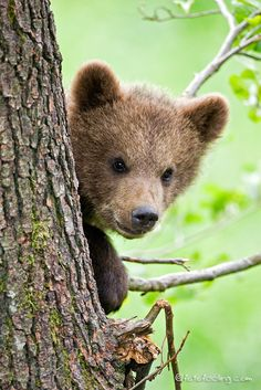 There need to be more pics of bear babies in my life