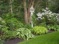 shade garden for the backyard...