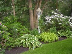 Hostas, birdhouse and roses