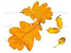 immagini foglie di quercia autunnali - Cerca con Google
