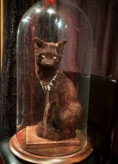 Black Cat Taxidermy, Oddities.