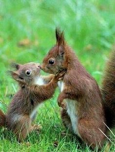There are lots of squirrel like mammals like the ground hog, gopher as well as prairie dog. When it comes to foods, what do squirrel love to eat? Cute Baby Animals, Animals And Pets, Funny Animals, Animal Babies, Wild Animals, Beautiful Creatures, Animals Beautiful, Cute Squirrel, Squirrels