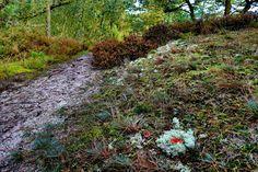 mano kellner, nature mandala im dänischen zauberwald
