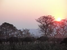 Südafrika – Kruger National Park
