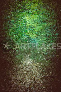 """""""Waldweg"""" Photography by Markus Keller buy now as poster, art print and greeting card. Canvas Prints, Art Prints, Buy Posters, Sell Your Art, Greeting Card, Trees, Photography, Painting, Design"""