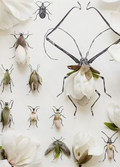 Kari Herer ingeniously reinvents traditional specimen displays by using flowers paired with illustrations in place of insects in her wunderkammer-worthy photos.